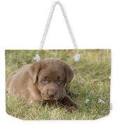 Chocolate Labrador Puppy Weekender Tote Bag