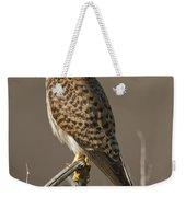 Common Kestrel Falco Tinnunculus Weekender Tote Bag