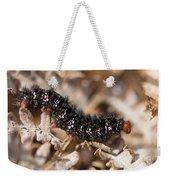 Glanville Fritillary Butterfly Caterpillar - Melitaea Cinxia Weekender Tote Bag