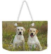 Labrador Retriever Dogs Weekender Tote Bag