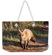 Red Fox In Prospect Park Weekender Tote Bag