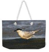 Sandwich Tern Weekender Tote Bag