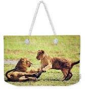 Small Lion Cubs Playing. Tanzania Weekender Tote Bag