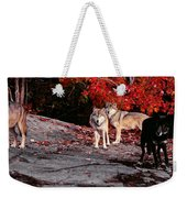Timber Wolves Under A Red Maple Tree - Pano Weekender Tote Bag