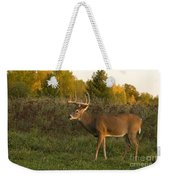 White-tailed Buck In Fall Weekender Tote Bag