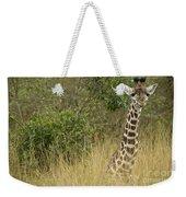 Young Giraffe In Kenya Weekender Tote Bag