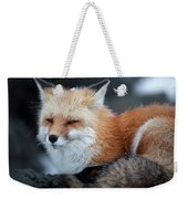 A Red Fox  On The Summit Of Mt Weekender Tote Bag