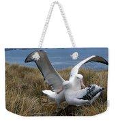 Albatros Royal Diomedea Epomophora Weekender Tote Bag