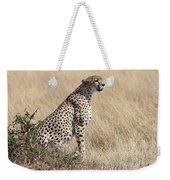 Cheetah Searching For Prey Weekender Tote Bag