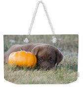 Chocolate Labrador Puppy Weekender Tote Bag