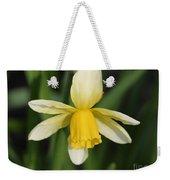 Cyclamineus Daffodil Named Jack Snipe Weekender Tote Bag