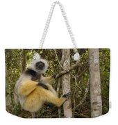 Diademed Sifaka Madagascar Weekender Tote Bag