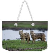 Golden Jackal Canis Aureus Weekender Tote Bag