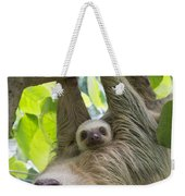 Hoffmanns Two-toed Sloth And Old Baby Weekender Tote Bag