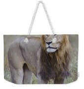 Male Lion Weekender Tote Bag
