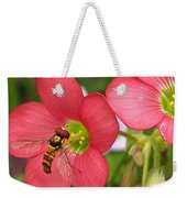 Oxalis Deppei Named Iron Cross Weekender Tote Bag