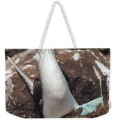 Blue-footed Booby Courtship Dance Weekender Tote Bag