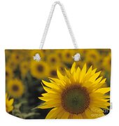 Close-up Of Sunflowers In A Field Weekender Tote Bag