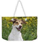 Jack Russell Terrier Dog Photograph By John Daniels
