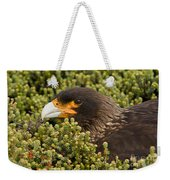 Striated Caracara Weekender Tote Bag