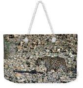 Arabian Leopard Panthera Pardus Weekender Tote Bag