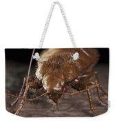 Bedbug Cimex Lectularius Weekender Tote Bag