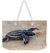 Leatherback Sea Turtle Hatchling Amelia Island Florida Weekender Tote Bag