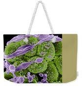 Methicillin-resistant Staphylococcus Weekender Tote Bag by Science Source