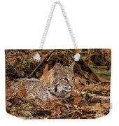 611000006 Bobcat Felis Rufus Wildlife Rescue Weekender Tote Bag