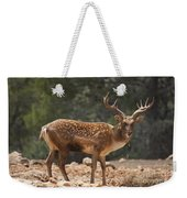Mesopotamian Fallow Deer  Weekender Tote Bag
