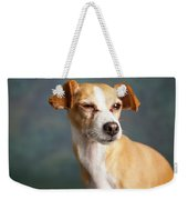 Portrait Of A Chihauhua Mix Dog Weekender Tote Bag