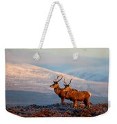 Red Deer Stags Weekender Tote Bag