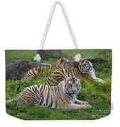 Siberian Tigers, China Weekender Tote Bag