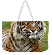 Tigre De Sumatra Panthera Tigris Weekender Tote Bag