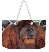 Portrait Of A Large Male Orangutan Weekender Tote Bag