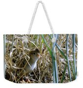 A Baby Quail Looks Back Weekender Tote Bag