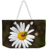 A Beattle On A Daisy Weekender Tote Bag