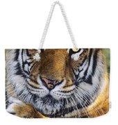 A Bengal Tiger Portrait Endangered Species Wildlife Rescue Weekender Tote Bag