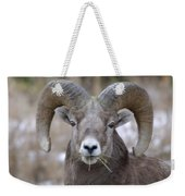 A Big Ram Caught With His Mouth Full Weekender Tote Bag