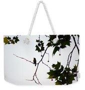 A Brown Thrasher Sings In Sycamore Tree Weekender Tote Bag