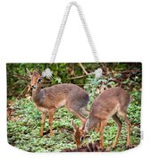 A Couple Of Dik-dik Antelopes In Tanzania. Africa Weekender Tote Bag