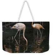 A Flamingo With Its Head Under Water In The Jurong Bird Park Weekender Tote Bag