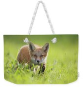 A Fox In The Grass  Montreal, Quebec Weekender Tote Bag