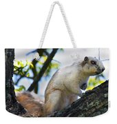 A Fox Squirrel Pauses Weekender Tote Bag
