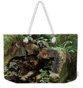 A Giant Falls - Life Emerges Weekender Tote Bag