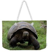 A Giant Tortoise Walks Along The Rim Weekender Tote Bag