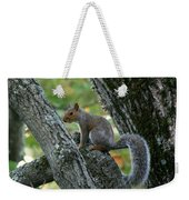 A Gray Squirrel Pose  Weekender Tote Bag