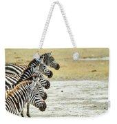 A Grevys Zebra In Ngorongoro Crater Weekender Tote Bag