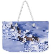 A Group Of Bighorn Sheep Ovis Weekender Tote Bag