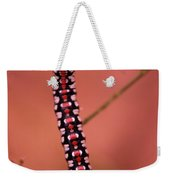 A Little Caterpillar Weekender Tote Bag by Jeff Swan